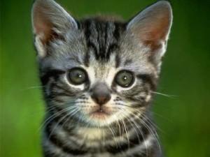 gatti milano
